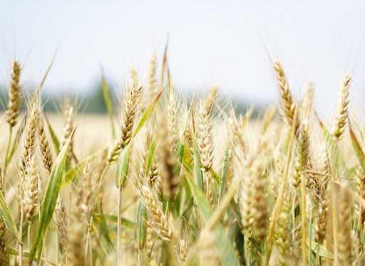 Landwirtschaft Hirblingen